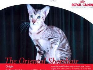 Pets Magazine Singapore (Issue-13)