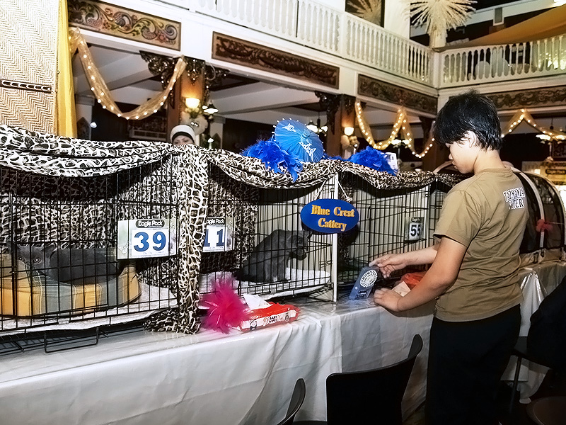 Blue Crest Cat Show