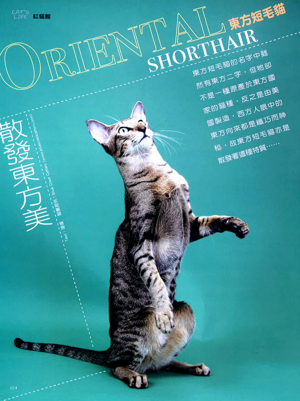 Cat's Life - Hong Kong Magazine Interview