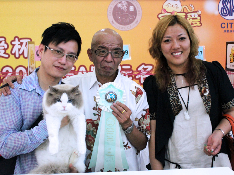 Chengdu Cat Show