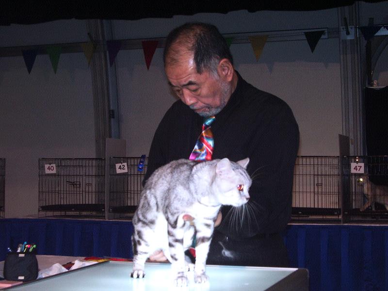 Feline Cat Show