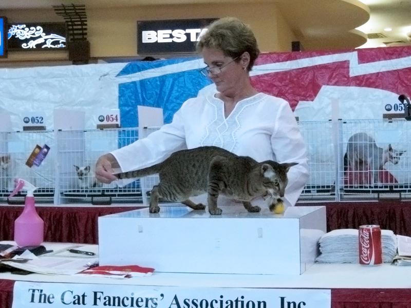 Kulai, Malaysia Cat Show
