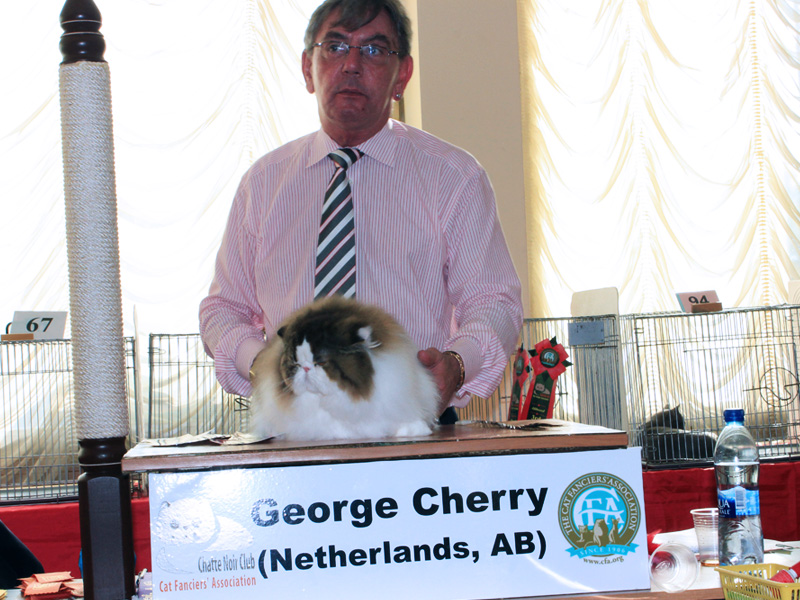 Moscow, Russia Cat Show Visit