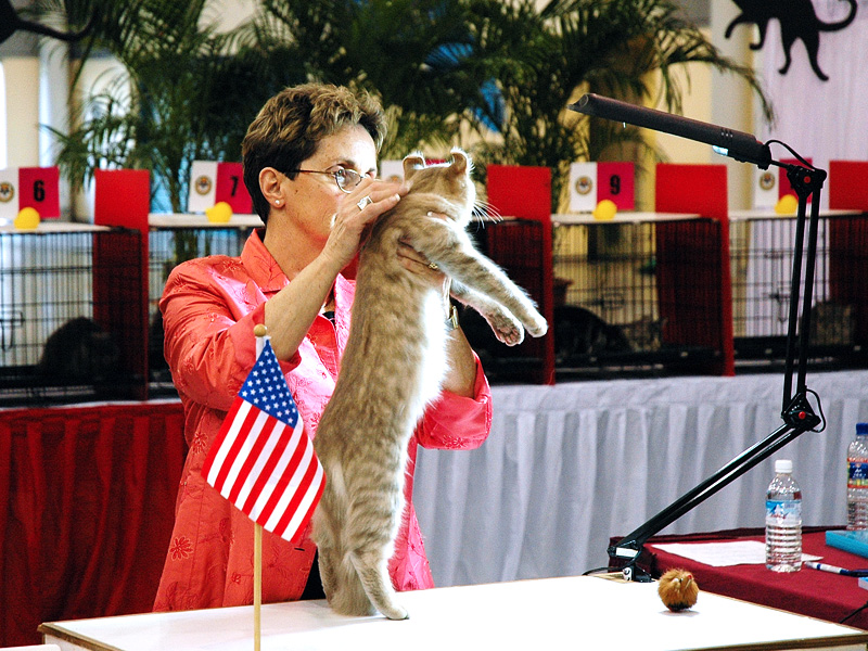 SCC 35th Anniversary Championship Cat Show