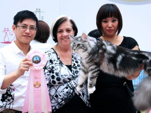 Shenyang, China Cat Show
