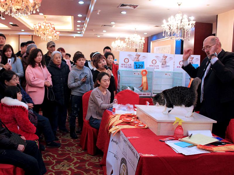 Shenyang, China Cat Show