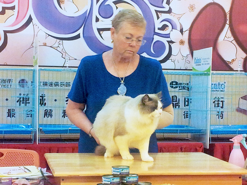 Guangdong Foshan, China Cat Show