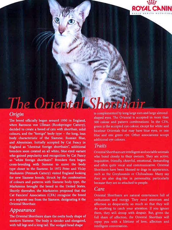 Pets Magazine Singapore (Issue 13)