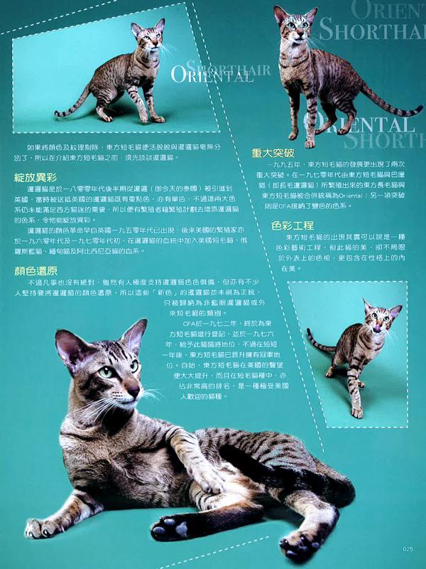 Cat's Life - Hong Kong Magazine Interview