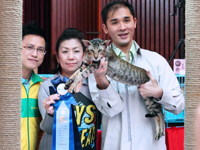 Hong Kong Cat Show