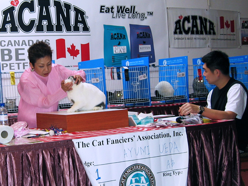 Malacca, Malaysia Cat Show