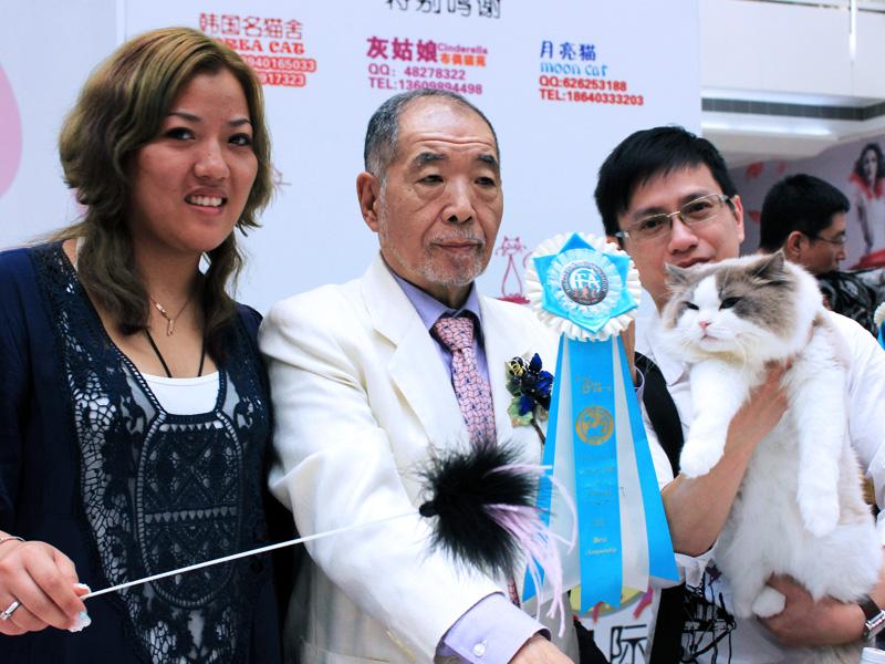 Shenyang Cat Show