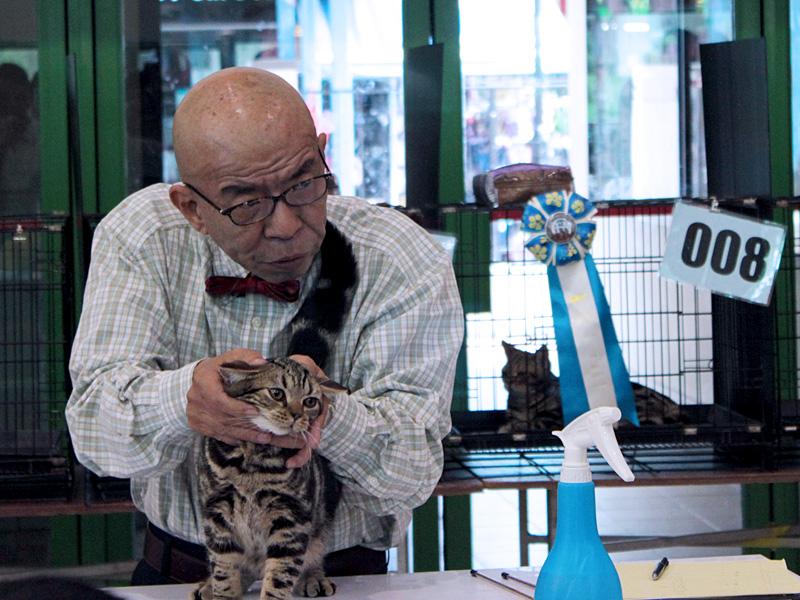 APCC Cat Show