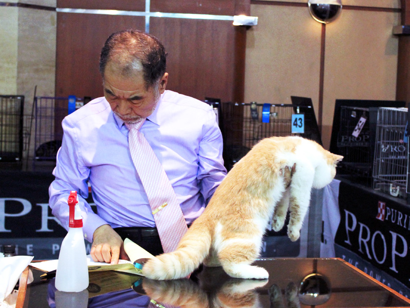 Bandung, Indonesia Cat Show