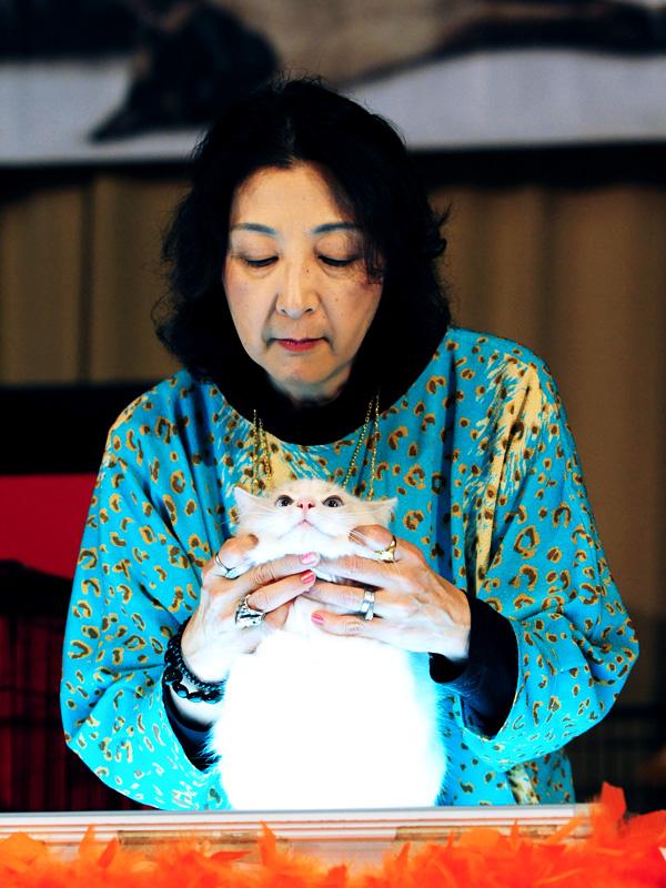 FFSS Cat Show