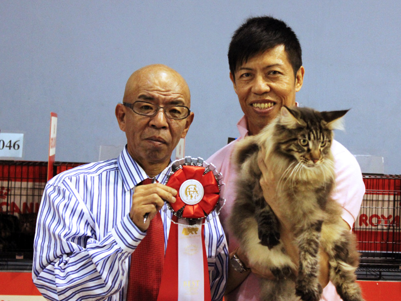 Kota Kinabalu, Malaysia Cat Show
