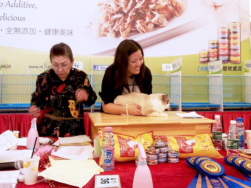 Guangdong Foshan, China Cat Show
